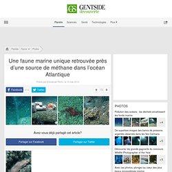 Une faune marine unique retrouvée près d'une source de méthane dans l'océan Atlantique