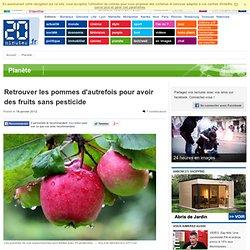 Retrouver les pommes d'autrefois pour avoir des fruits sans pesticide