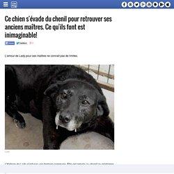 Ce chien s'évade du chenil pour retrouver ses anciens maîtres. Ce qu'ils font est inimaginable!