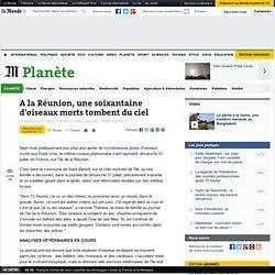 A la Réunion, une soixantaine d'oiseaux morts tombent du ciel - LeMonde.fr-Mozilla Firefox