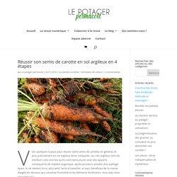 Réussir son semis de carotte en sol argileux en 4 étapes - Le potager permacole