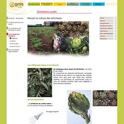 Réussir la culture des artichauts au jardin amateur