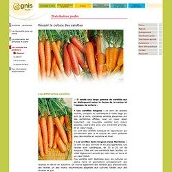 Réussir la culture des carottes au jardin amateur