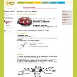 Réussir la culture des fraisiers au jardin amateur
