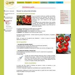 Réussir la culture des tomates au jardin amateur