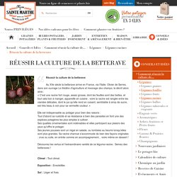 Réussir la culture de la betterave - FERME DE SAINTE MARTHE