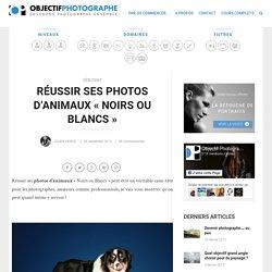 """Réussir ses photos d'animaux """"Noirs ou Blancs"""" - Objectif Photographe"""