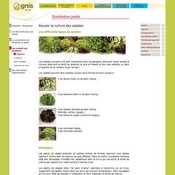 Réussir les salades au jardin amateur