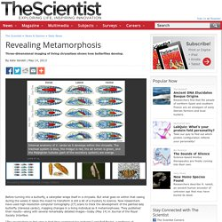 Revealing Metamorphosis