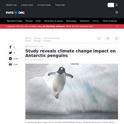 2019-12-reveals-climate-impact-antarctic-penguins.amp?usqp=mq331AQCKAE=&amp_js_v=0.1#aoh=15781210685489&amp_ct=1578121077009&referrer= %1$s&ampshare=