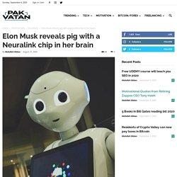 Elon Musk reveals pig with a Neuralink chip in her brain- Pak Vatan