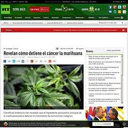 Revelan cómo detiene el cáncer la marihuana