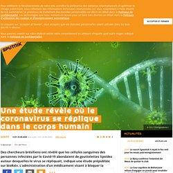 Une étude révèle où le coronavirus se réplique dans le corps humain