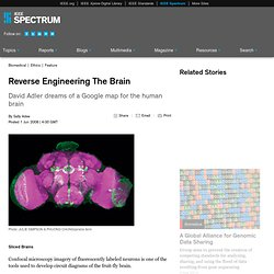 Reverse Engineering The Brain