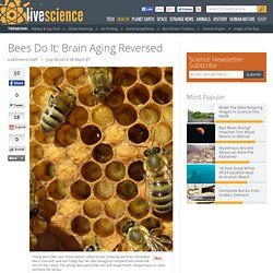 Bees Do It: Brain Aging Reversed