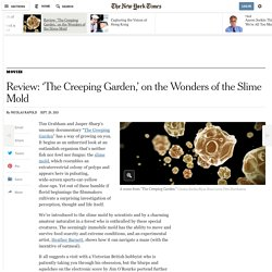 Review: 'The Creeping Garden,' on the Wonders of the Slime Mold