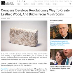 Company Develops Revolutionary Way to Create Leather, Wood, and Bricks from Mushrooms