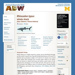 Rhincodon typus: INFORMATION