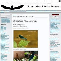 Libellules Rhodaniennes » Clés d'identification des odonates