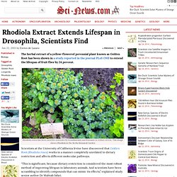 Rhodiola Extract Extends Lifespan in Drosophila, Scientists Find