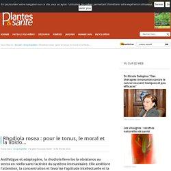 Rhodiola rosea : pour le tonus, le moral et la libido... - Encyclopé