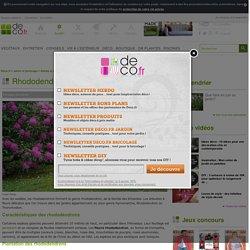 Rhododendron : Semis, entretien, culture et arrosage