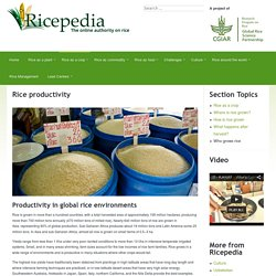 Rice productivity - Ricepedia
