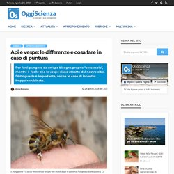 Punture di api e vespe: come riconoscerle e cosa fare