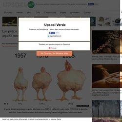 Los pollos se ven ridículamente más grandes que en 1950. Y aquí te mostramos por qué