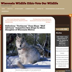 "Ridiculous ""Testimony"" From Sham ""Wolf Advisory"" Committee Sets Stage for Mass Slaughter of Wisconsin Wolves"
