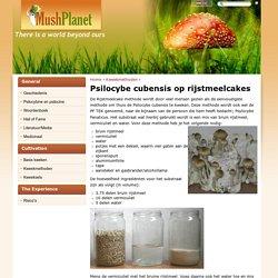 Psilocybe cubensis op rijstmeelcakes