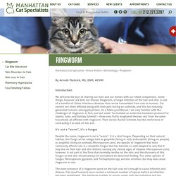 Manhattan Cat Specialists