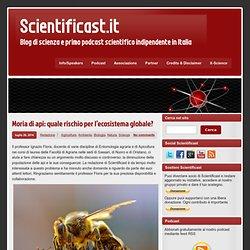 Moria di api: quale rischio per l'ecosistema globale?
