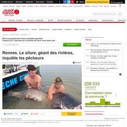 Rennes. Le silure, géant des rivières, inquiète les pêcheurs