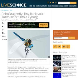 RoboDragonfly: Tiny Backpack Turns Insect into a Cyborg