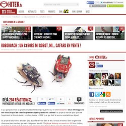 RoboRoach : un cyborg mi robot, mi… cafard en vente !