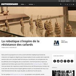 La robotique s'inspire de la résistance des cafards