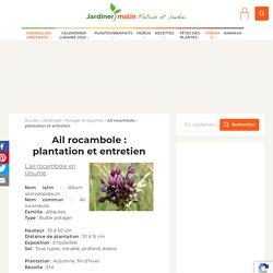 Ail rocambole : plantation, entretien et récolte