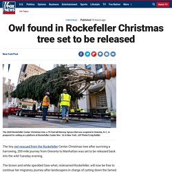 Owl found in Rockefeller Christmas tree set to be released