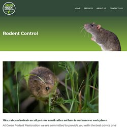 Cheap Rodent Control