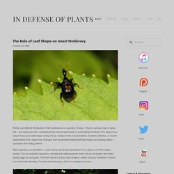 The Role of Leaf Shape on Insect Herbivory
