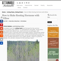 How to Make Rooting Hormone with Willow - Attainable Sustainable
