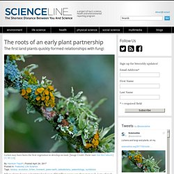 The roots of an early plant partnership