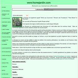 Romarin ou rosmarinus officinalis, fiche technique complète