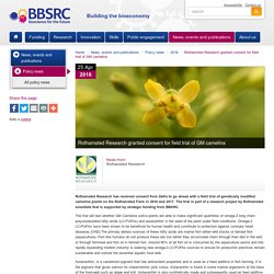 BBSRC 25/04/16 Rothamsted Research granted consent for field trial of GM camelina