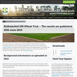 ROTHAMSTED RESEARCH 25/06/15 Rothamsted GM Wheat Trial