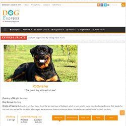 Rottweiler Dog Breed Information