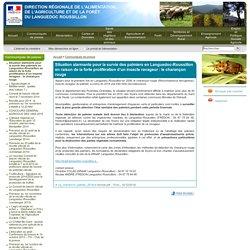 Situation alarmante pour la survie des palmiers en Languedoc-Roussillon en raison de la forte prolifération d'un insecte ravageur: le charançon rouge