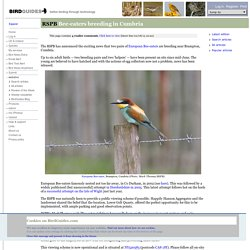RSPB: Bee-eaters breeding in Cumbria