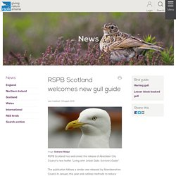 RSPB Scotland welcomes new gull guide